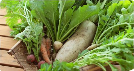地産地消の健康野菜